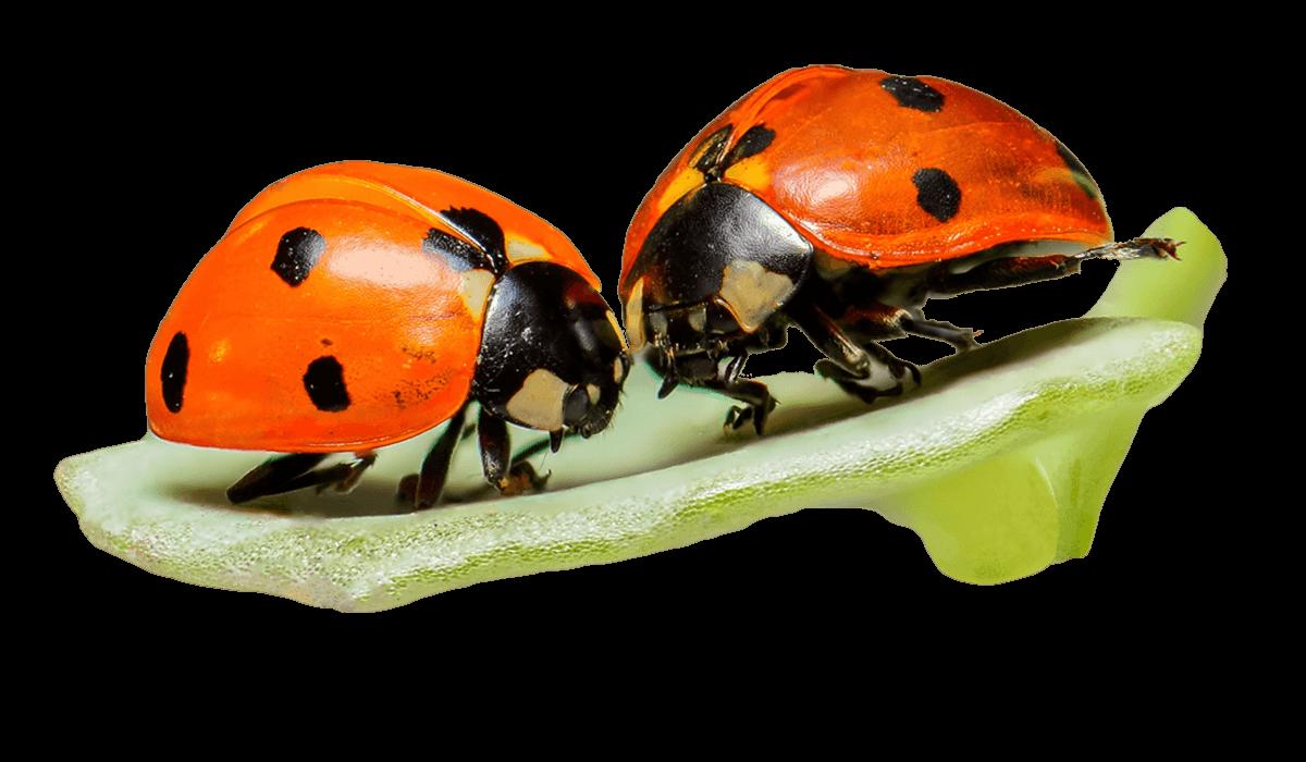Ladybird Skatepark Case Header Lieveheersbeestje